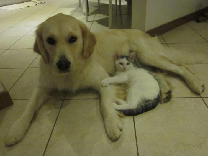 Aurora e il gattino